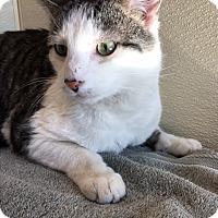 Adopt A Pet :: Hyms - North Las Vegas, NV