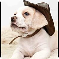 Adopt A Pet :: Theo - Richardson, TX