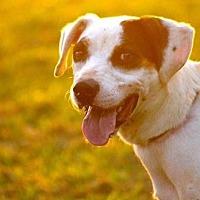 Adopt A Pet :: Reesie - McKenzie, TN