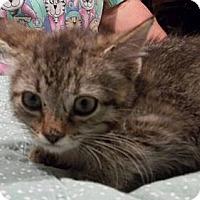 Adopt A Pet :: Dylan - Acme, PA