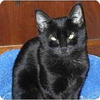 Adopt A Pet :: Joplin  (NW) - Little Falls, NJ