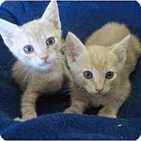 Adopt A Pet :: Nick & Nate - Davis, CA