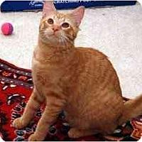 Adopt A Pet :: Kelsey - Alexandria, VA