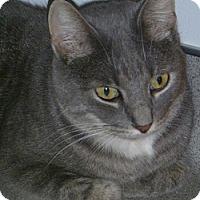 Adopt A Pet :: Clarissa - Hamburg, NY