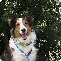 Adopt A Pet :: Maggie - Alderson, WV