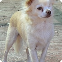 Adopt A Pet :: Harley - Simi Valley, CA