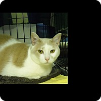 Adopt A Pet :: Pretty Girl*Courtesy Post* - Berkeley Hts, NJ