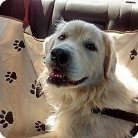 Adopt A Pet :: Potter - Brattleboro, VT