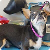 Adopt A Pet :: Edgar - Martinez, GA