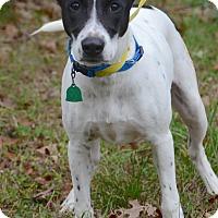 Adopt A Pet :: Tybalet - Charlemont, MA