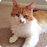 Adopt A Pet :: ORiley - Colorado Springs, CO