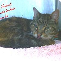Adopt A Pet :: odo - Muskegon, MI