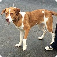 Adopt A Pet :: Khloe - Waldorf, MD