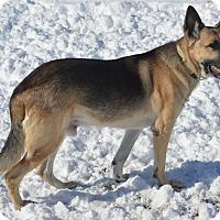 Adopt A Pet :: Prinz - Aurora, CO