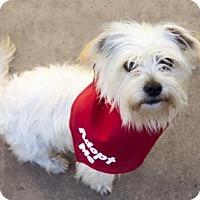 Adopt A Pet :: Zuma - Sacramento, CA