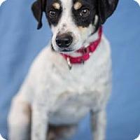Adopt A Pet :: Harrison - Bradenton, FL