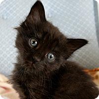 Adopt A Pet :: Rhianna - Sherman Oaks, CA