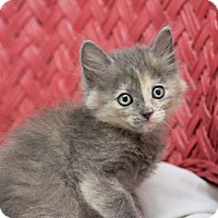 Adopt A Pet :: Fiona - Fountain Hills, AZ