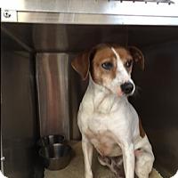 Adopt A Pet :: Coach - Umatilla, FL