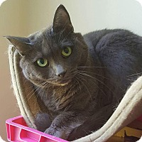 Domestic Shorthair Cat for adoption in Tega Cay, South Carolina - Olivia