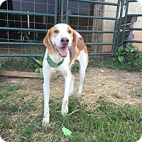 Adopt A Pet :: Willie Lyle Nelson - Pittsboro, NC