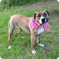 Adopt A Pet :: Sissy - Darlington, SC