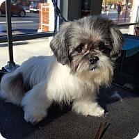 Adopt A Pet :: Waldo - Bellingham, WA
