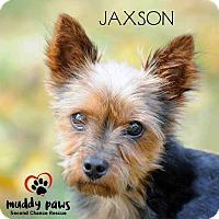 Adopt A Pet :: Jaxson - Adoption Pending - Council Bluffs, IA