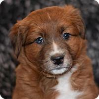 Adopt A Pet :: Nola - Dodson, MT