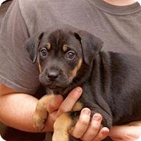 Adopt A Pet :: Veronica - Wichita, KS