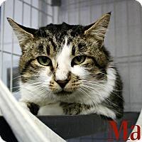 Adopt A Pet :: Mat - Melbourne, KY