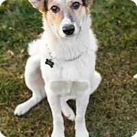 Adopt A Pet :: Abe - Pending - Saskatoon, SK