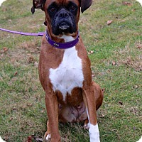Adopt A Pet :: Sadie - New Oxford, PA