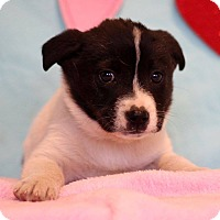 Adopt A Pet :: Morris - Waldorf, MD