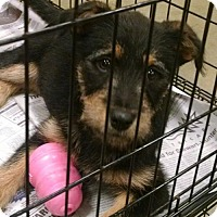 Adopt A Pet :: Ciao - Pembroke, GA