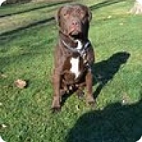 Adopt A Pet :: Barry - Lewisville, IN