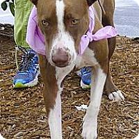 Adopt A Pet :: Wiggle Wiggle Wiggle Patches - Sacramento, CA