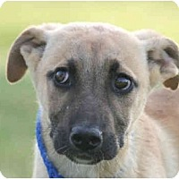 Adopt A Pet :: Melvin-URGENT - kennebunkport, ME