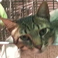 Adopt A Pet :: Marlowe - Dallas, TX
