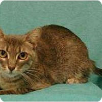 Adopt A Pet :: Meg - Sacramento, CA