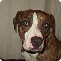 Adopt A Pet :: Frankie - Paris, IL