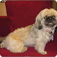 Adopt A Pet :: Layla - Rigaud, QC