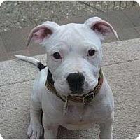 Adopt A Pet :: Wilma - San Jose, CA