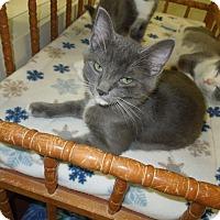 Adopt A Pet :: Garrett - Medina, OH