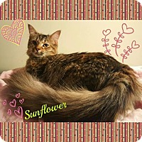 Adopt A Pet :: Sunflower - Harrisburg, NC