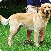 Adopt A Pet :: Simon - Osseo, MN
