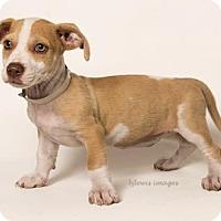 Adopt A Pet :: Wanda - Sudbury, MA
