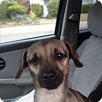 Adopt A Pet :: Dexter - Lodi, CA