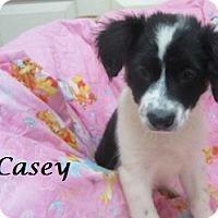 Adopt A Pet :: Casey - Bartonsville, PA