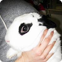 Adopt A Pet :: Bubbles - Los Angeles, CA
